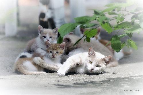 Family of Kittens by Horace Dozier, Sr.