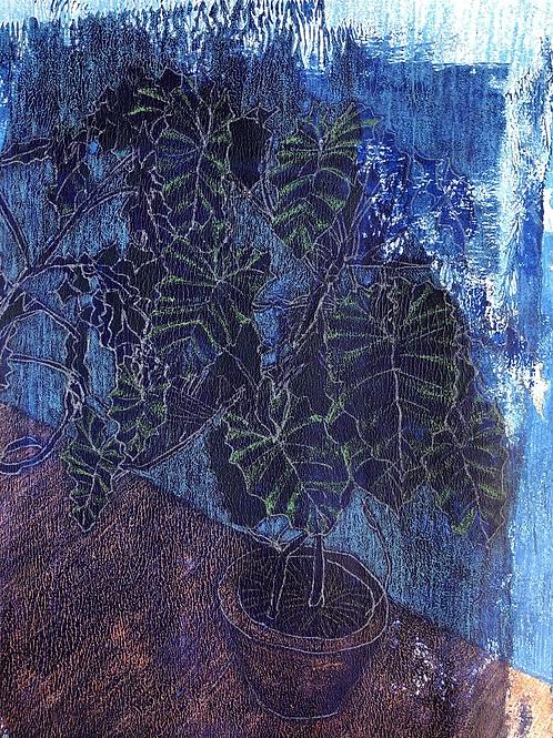 Midnight House Plant No1 2020