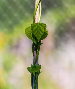 Hearts in My Garden