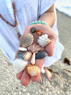 sarasota shells