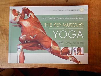 key muscles.jpeg