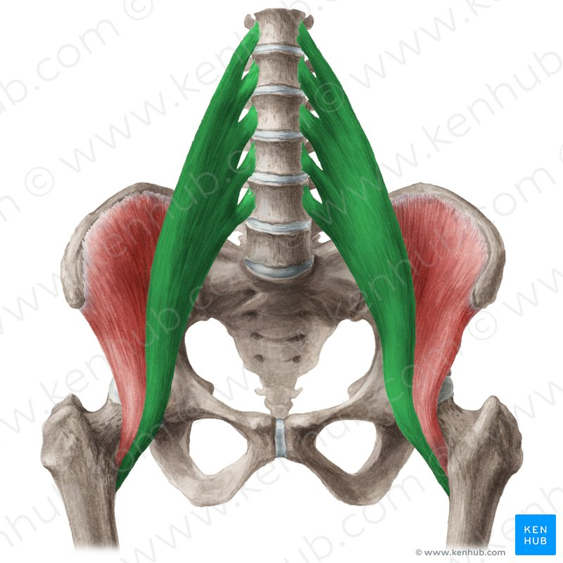 spine, psoas, chronic pain, inflamation
