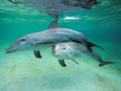 dolphins_3_orig