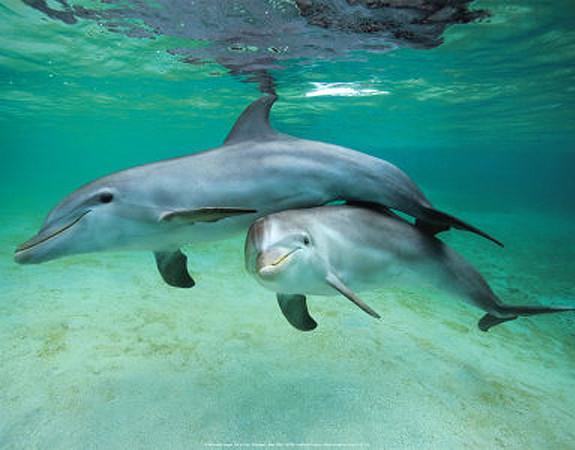 dolphins_3_orig.jpg