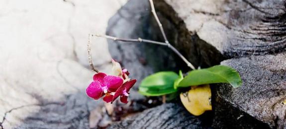 orchid19.webp