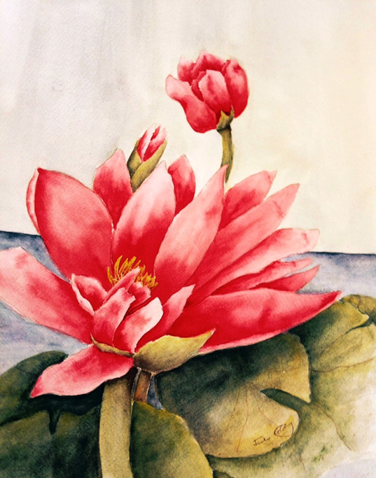 Sunny Days Are Here, Waterlily