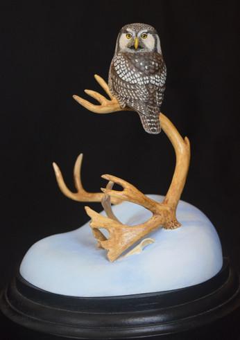 Northern Hawk Owl miniature