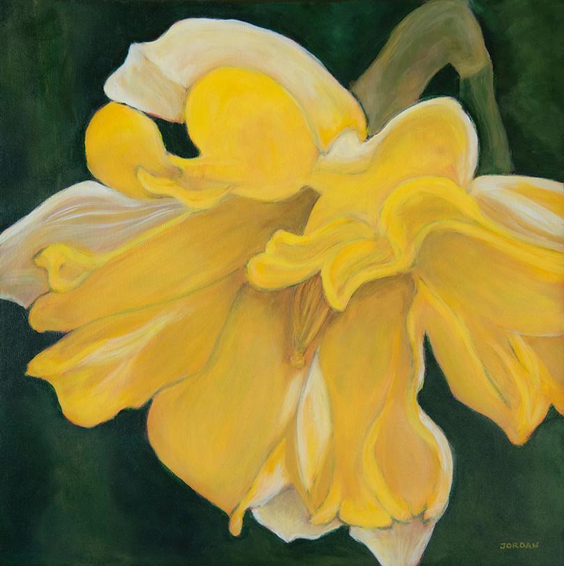 ruffled-daffodil