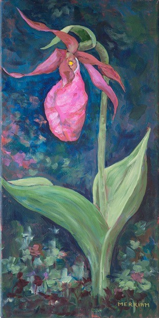 Pink Moccasin Flower   acrylic