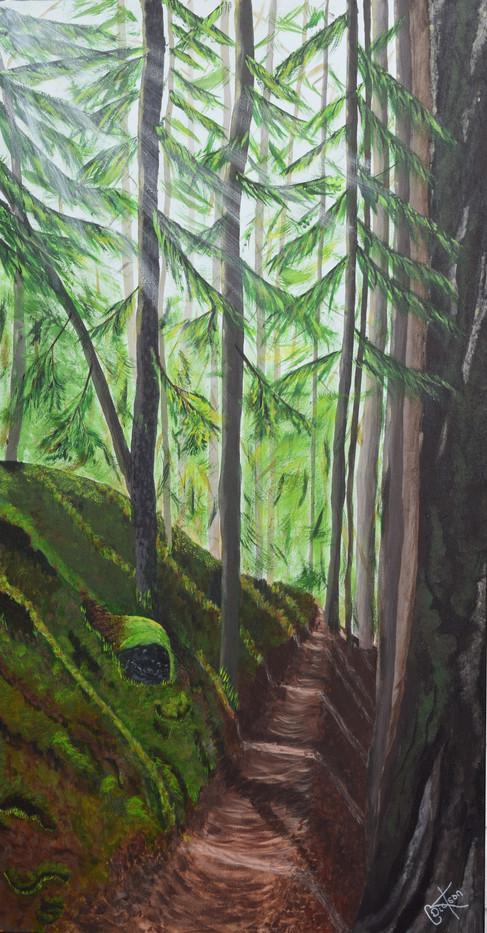 Willimet National Forest