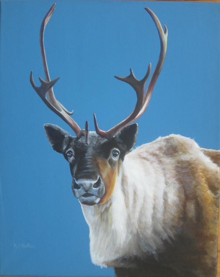 Caribou 20x16 acrylic