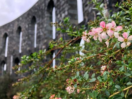 McCaig's Tower, Oban