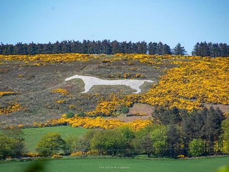 The Mormond Hill White Horse