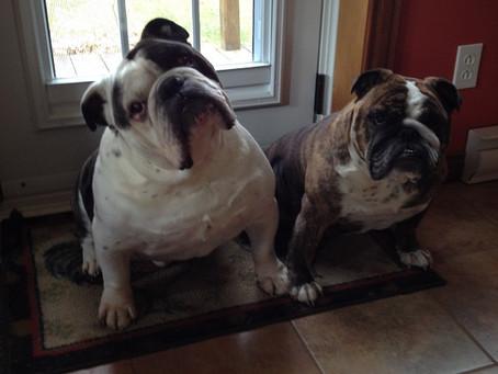 La canicule et mon chien