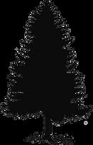 cedar-tree-clipart-1.png