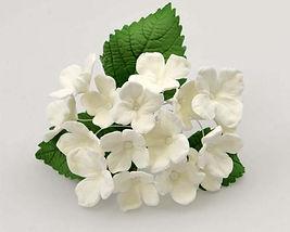 Hydrangea White Spray