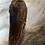 Thumbnail: Fasan Flügel
