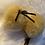 Thumbnail: Schafbällchen Anhänger