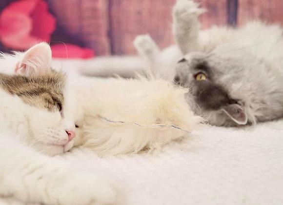 Katzen-Kissen /Cat Cushion