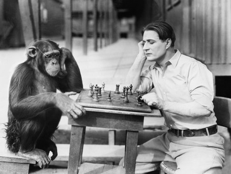 Who's Running the Show, You or the Chimp?