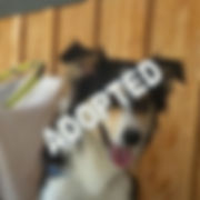 Ralph Adopted.jpg