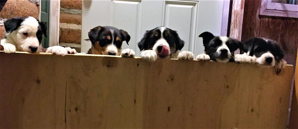 Pup wall (2).jpg
