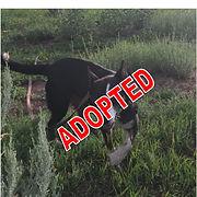 Maggie Adopted.jpg