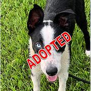 Chance adopted.jpg