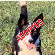 Maya Adopted.jpg