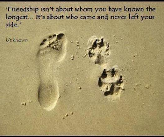 Dog friendship.jpg