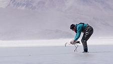 Andean Highland Flamingos SAFE.1.ZCOG.Fl