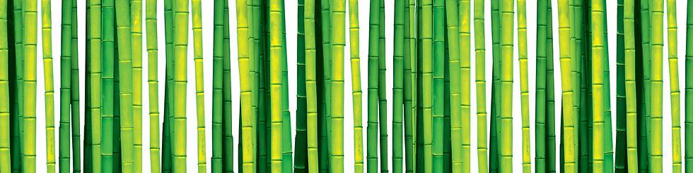 bambootrees.jpg