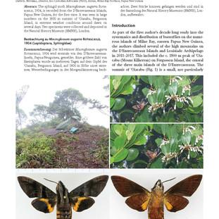 A note on Macroglossum augarra Rothschild, 1904 (Lepidoptera, Sphingidae)