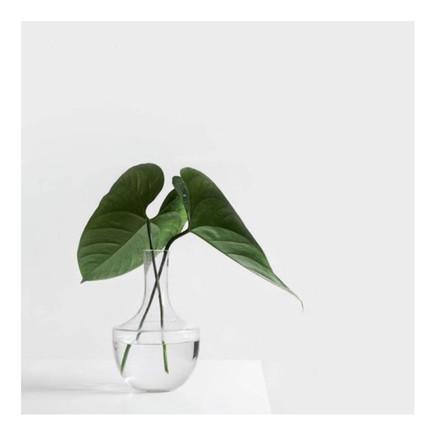 [RAMADAN] : PLANT THE SEEDS OF YOUR SUCCESS THIS RAMADAN ⎯ PLANTES LES GRAINES DE TON SUCCES CE RAMA