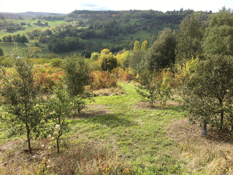 Part of a truffiere less than 500m from ours