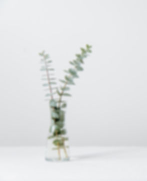 green fern plant inside clear glass vase_edited.jpg