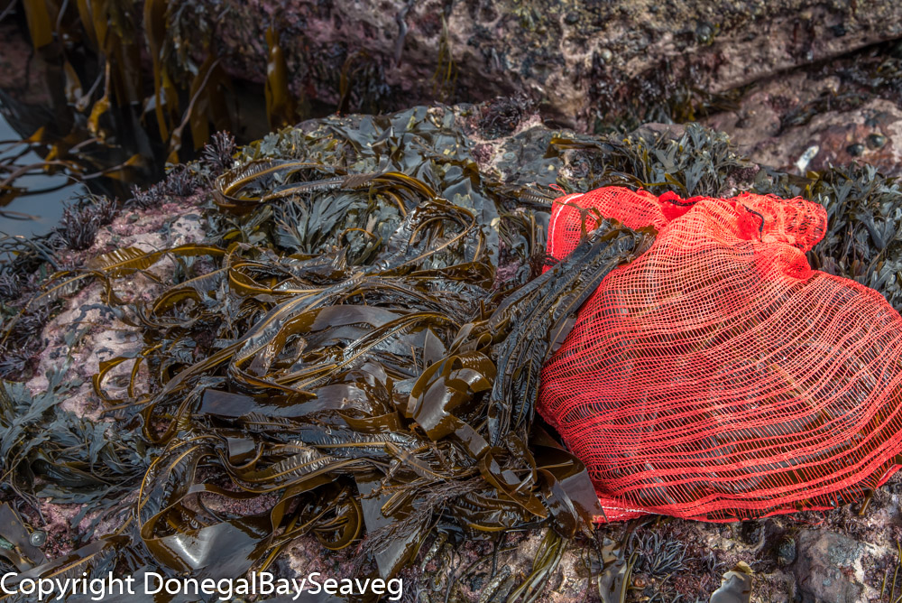 seaweed waiting to be bagged