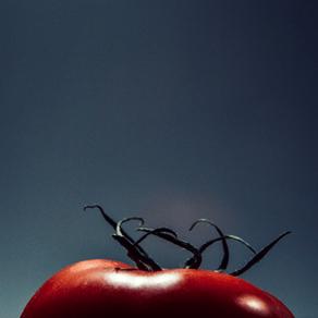 Ready Steady Tomato – STP033
