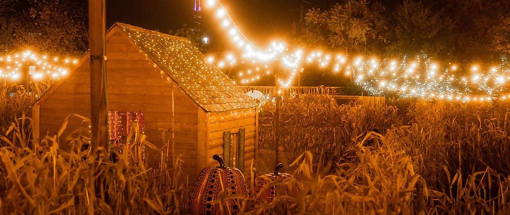 A corn maze for a fall anniversary idea