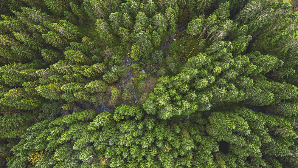 Over head photo of a forest and lots of trees