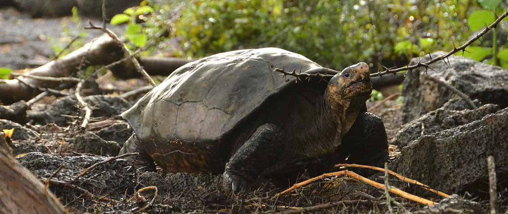turtles are back for a monthly dose of goodness