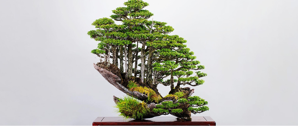 a mini forest made from a bonsai tree