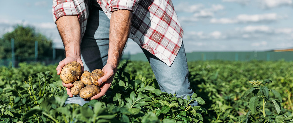 Potato milk is the newest (and most eco-friendly) plant-based option.