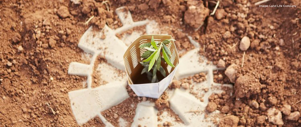 Is this innovative cocoon the key to reforestation?