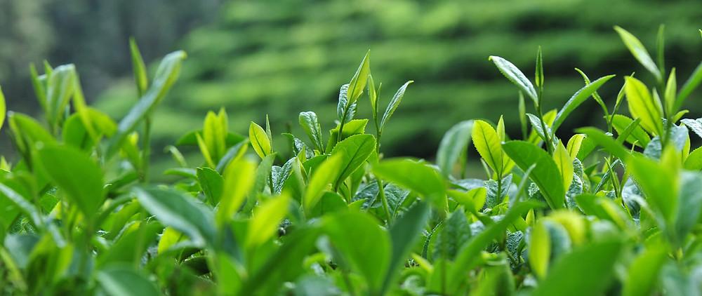 Saplings growing