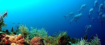 Diving Santa Maria, Sal, Cape Verde