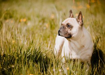 Familienfotografie  Hundefotografie Hameln Photomagie