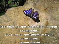 butterflies-1399153