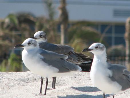 Feed a Seagull