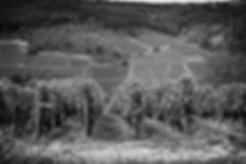 Fotolia_172189710_XXL (noir & blanc).jpg